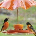 Идеи кормушек  и для птиц из разных материалов