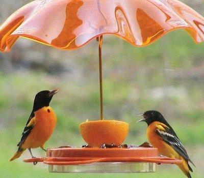 Позаботимся о наших пернатых друзьях кормушки, кормушки для птиц, для птиц, птичьи кормушки, для пернатых, осень, зима, домики для птиц, еда для птиц, кормушки из подручного материала, для зимы, семечки, орехи, зимовка птиц, птичья столовая, Позаботимся о наших пернатых друзьях, как сделать кормушку для птиц, из чего сделать кормушку для птиц, кормушки для птиц своими руками, оригинальные птичьи кормушки, идеи птичьих кормушек, поилки и кормушки для птиу, кормушки для птиц своими руками фото и оригинальные идеи, кормушка для птиц из старой посуды, кормушка для птиц своими руками фото из полипропиленовых труб, кормушка из пластиковой бутылки 1.5 литра для птиц, кормушки для птиц своими руками фото, кормушки для птиц своими руками из коробок, как смастерить кормушку для птиц, как сделать подвесную кормушку для птиц, как кормить птиц, домики для птиц идеи, домики для птиц фото, Позаботимся о наших пернатых друзьях